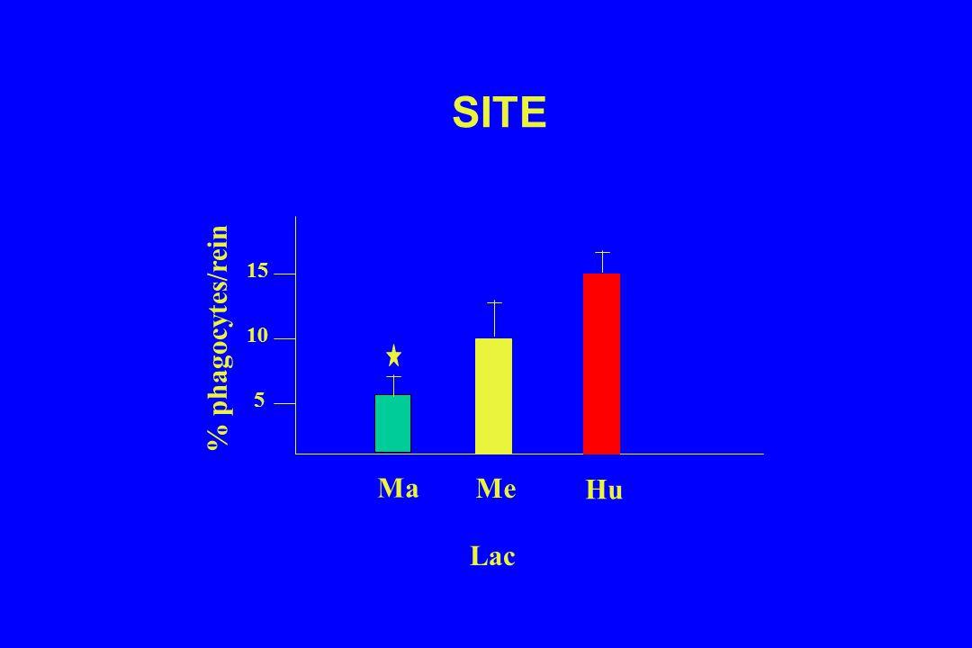 SITE % phagocytes/rein 5 10 15 Ma Me Hu Lac