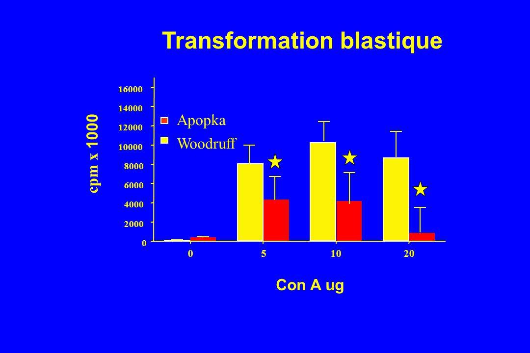 051020 0 2000 4000 6000 8000 10000 12000 14000 16000 Apopka Woodruff Con A ug cpm x 1000 Transformation blastique