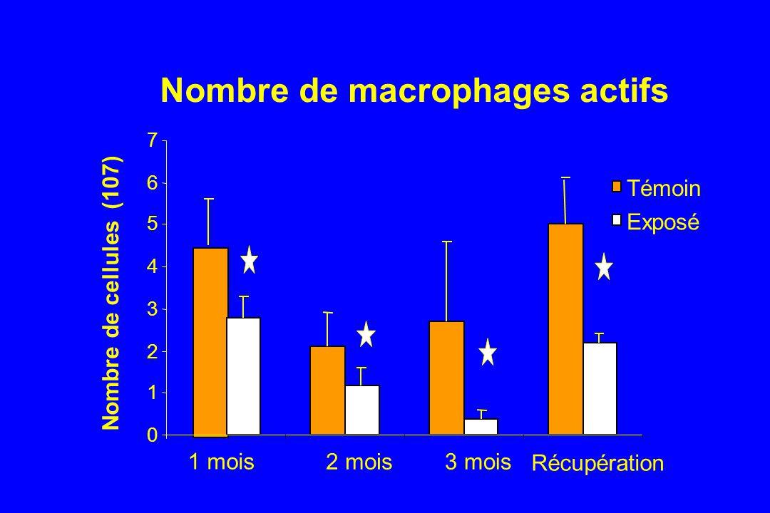 Nombre de macrophages actifs 0 1 2 3 4 5 6 7 1 mois 2 mois3 mois Récupération Nombre de cellules (107) Témoin Exposé