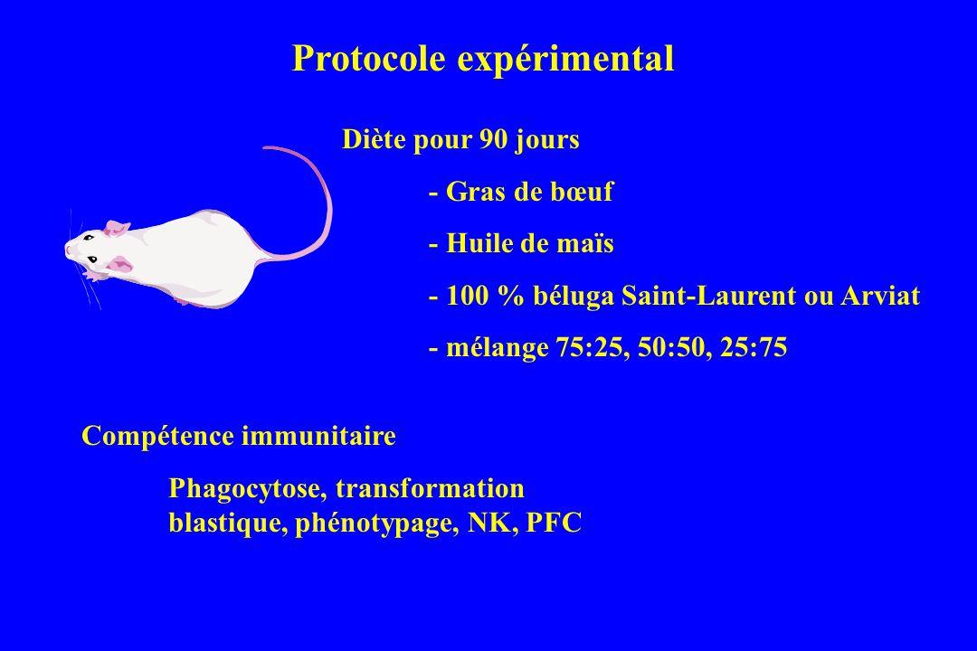 Diète pour 90 jours - Gras de bœuf - Huile de maïs - 100 % béluga Saint-Laurent ou Arviat - mélange 75:25, 50:50, 25:75 Compétence immunitaire Phagocytose, transformation blastique, phénotypage, NK, PFC Protocole expérimental