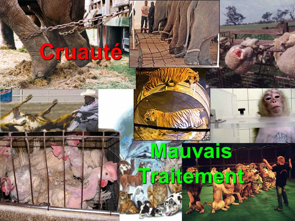 17 à 22 millions animaux sont utilisés chaque année Seulement 5 à 25% des tests sont agréable avec les résultat dhumain