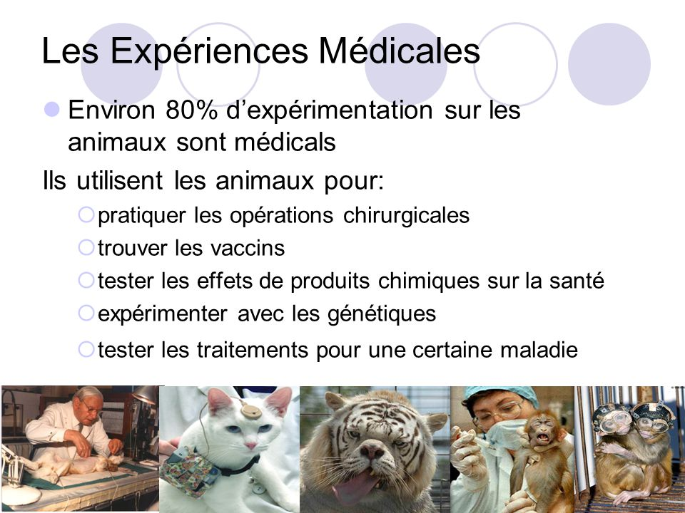 Les Expériences Médicales Environ 80% dexpérimentation sur les animaux sont médicals Ils utilisent les animaux pour: pratiquer les opérations chirurgicales trouver les vaccins tester les effets de produits chimiques sur la santé expérimenter avec les génétiques tester les traitements pour une certaine maladie