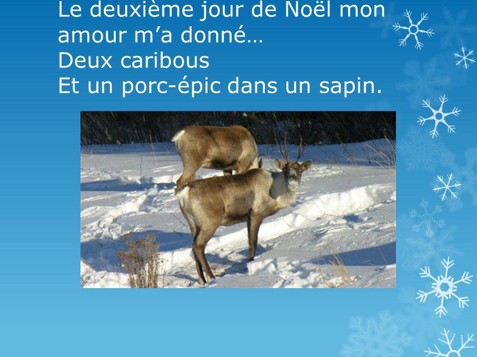 Le deuxième jour de Noël mon amour ma donné… Deux caribous Et un porc-épic dans un sapin.