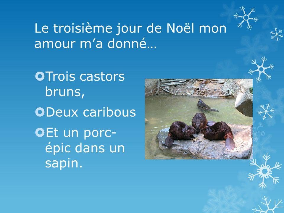 Le troisième jour de Noël mon amour ma donné… Trois castors bruns, Deux caribous Et un porc- épic dans un sapin.