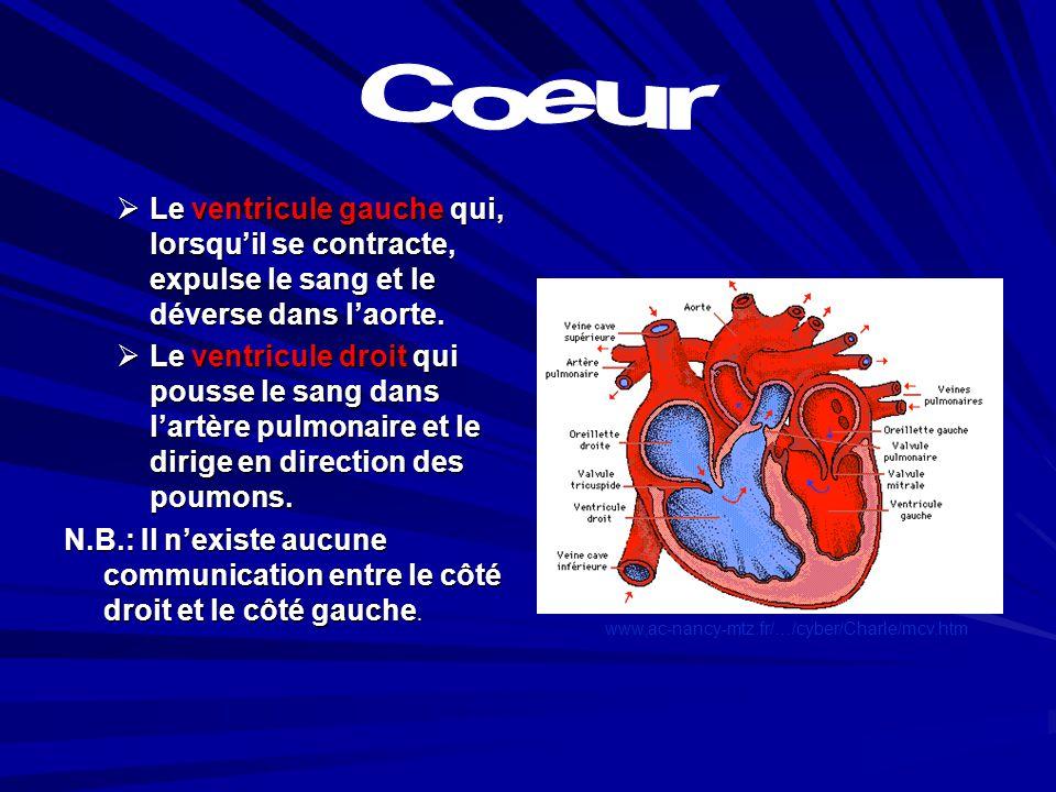 Le cœur est un muscle creux de 4 cavités: Le cœur est un muscle creux de 4 cavités: Loreillette droite qui par les veines caves et les petits vaisseau