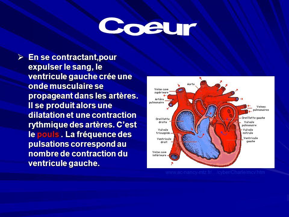 Le ventricule gauche qui, lorsquil se contracte, expulse le sang et le déverse dans laorte. Le ventricule gauche qui, lorsquil se contracte, expulse l