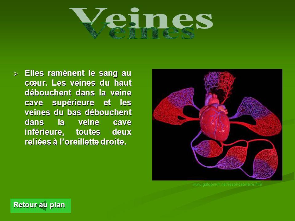 En quittant les capillaires, le sang pénètre dans les veinules qui deviennent, en sunissant les une aux autres, des veines. La pression y est faible.