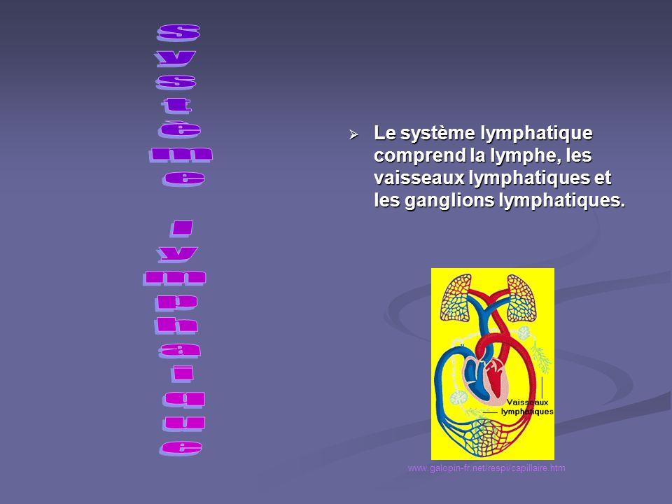 Dans la voie systémique, la sang chargé doxygène sort du ventricule gauche par laorte, se dirige dans les différentes artères et artérioles du corps,