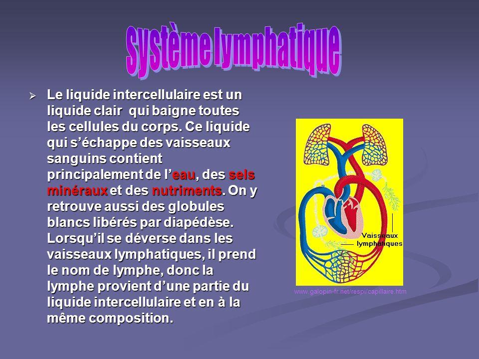 Le système lymphatique comprend la lymphe, les vaisseaux lymphatiques et les ganglions lymphatiques. www.galopin-fr.net/respi/capillaire.htm