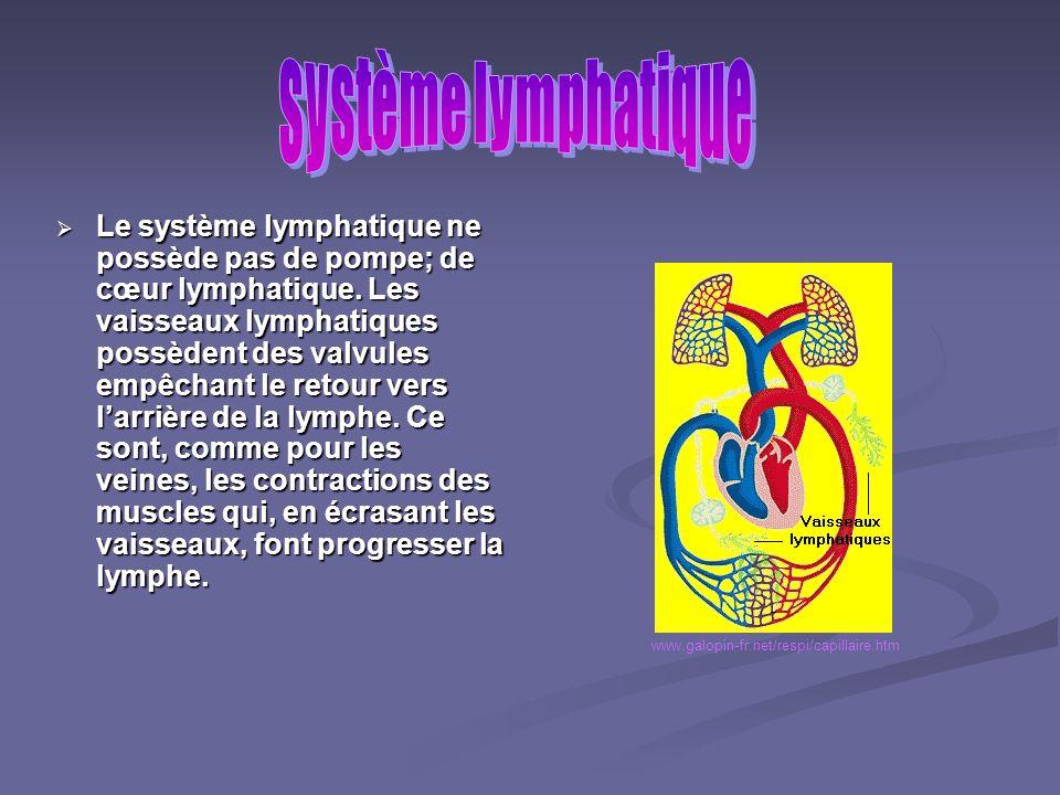 Le liquide intercellulaire est un liquide clair qui baigne toutes les cellules du corps. Ce liquide qui séchappe des vaisseaux sanguins contient princ