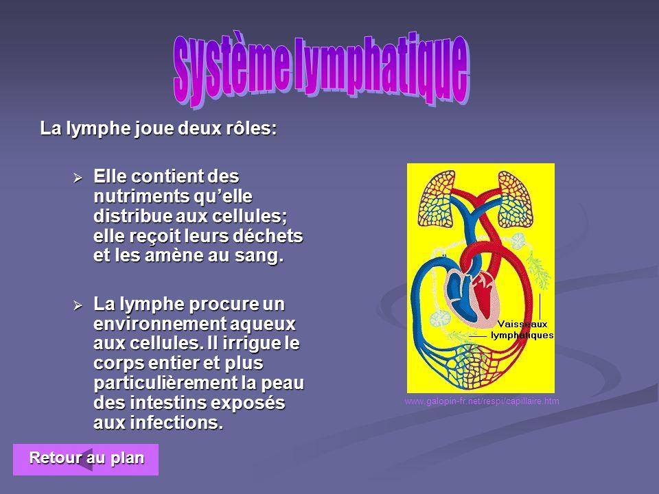Le système lymphatique ne possède pas de pompe; de cœur lymphatique. Les vaisseaux lymphatiques possèdent des valvules empêchant le retour vers larriè