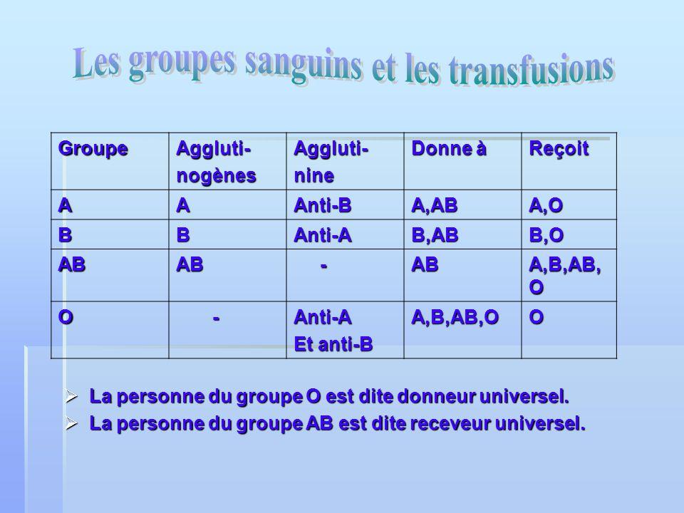 les personnes du groupe A possèdent des anti-B. les personnes du groupe A possèdent des anti-B. les personnes du groupe B possèdent des anti-A. les pe