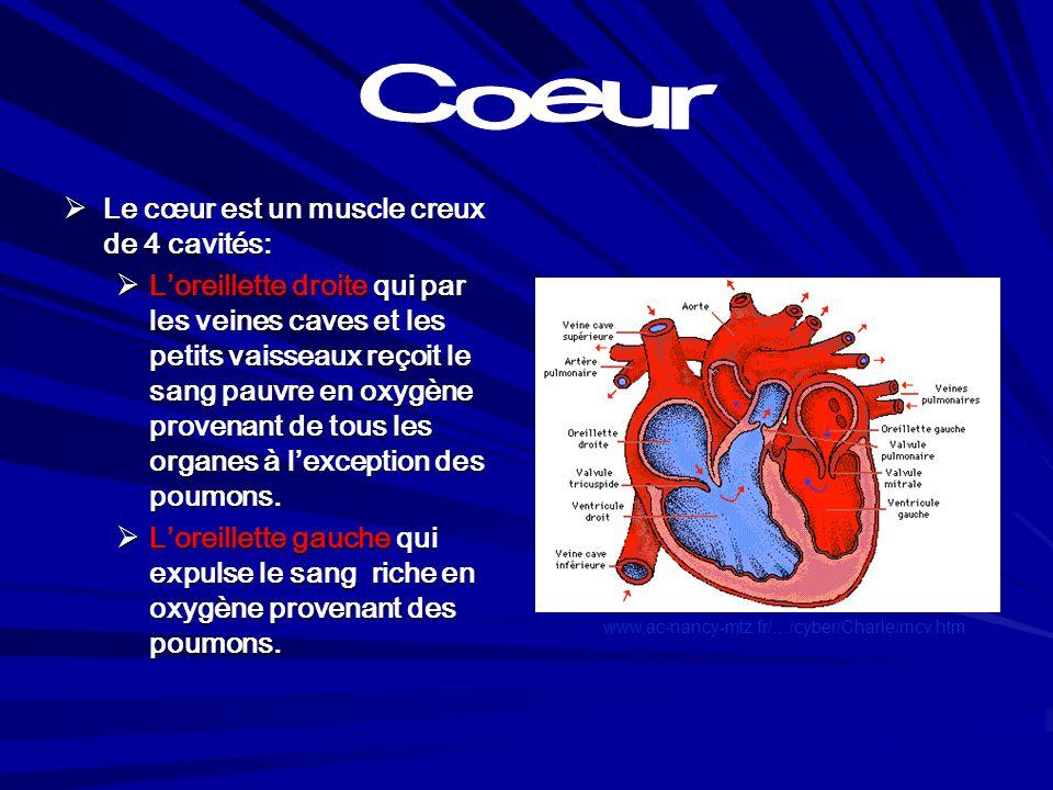 Le cœur est un muscle creux de 4 cavités: Le cœur est un muscle creux de 4 cavités: Loreillette droite qui par les veines caves et les petits vaisseaux reçoit le sang pauvre en oxygène provenant de tous les organes à lexception des poumons.