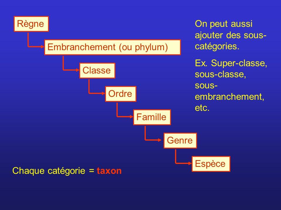 Règne Embranchement (ou phylum) Chaque catégorie = taxon On peut aussi ajouter des sous- catégories. Ex. Super-classe, sous-classe, sous- embranchemen
