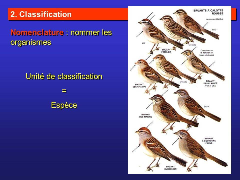 2. Classification Nomenclature : nommer les organismes Unité de classification = Espèce Unité de classification = Espèce