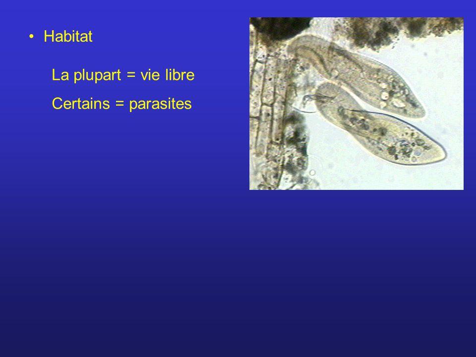 Habitat La plupart = vie libre Certains = parasites