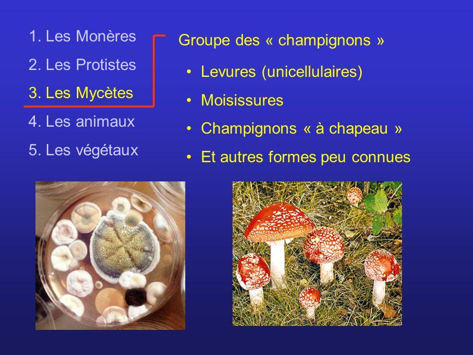 1. Les Monères 2. Les Protistes 3. Les Mycètes 4. Les animaux 5. Les végétaux Groupe des « champignons » Levures (unicellulaires) Moisissures Champign