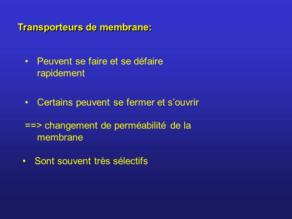 Transporteurs de membrane: Peuvent se faire et se défaire rapidement Certains peuvent se fermer et souvrir ==> changement de perméabilité de la membrane Sont souvent très sélectifs