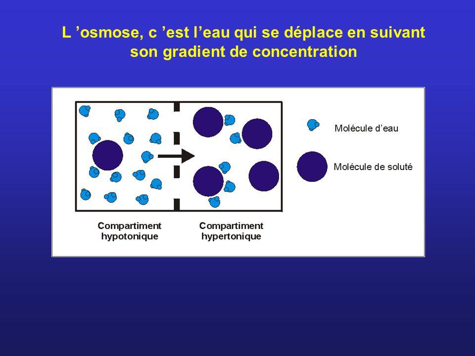 L osmose, c est leau qui se déplace en suivant son gradient de concentration