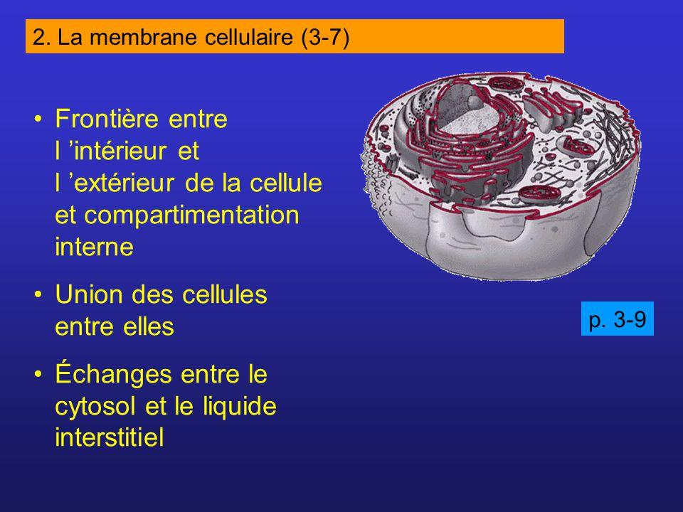 Frontière entre l intérieur et l extérieur de la cellule et compartimentation interne Union des cellules entre elles Échanges entre le cytosol et le liquide interstitiel 2.