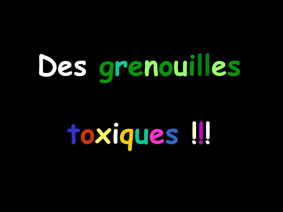 Des grenouilles toxiques !!!