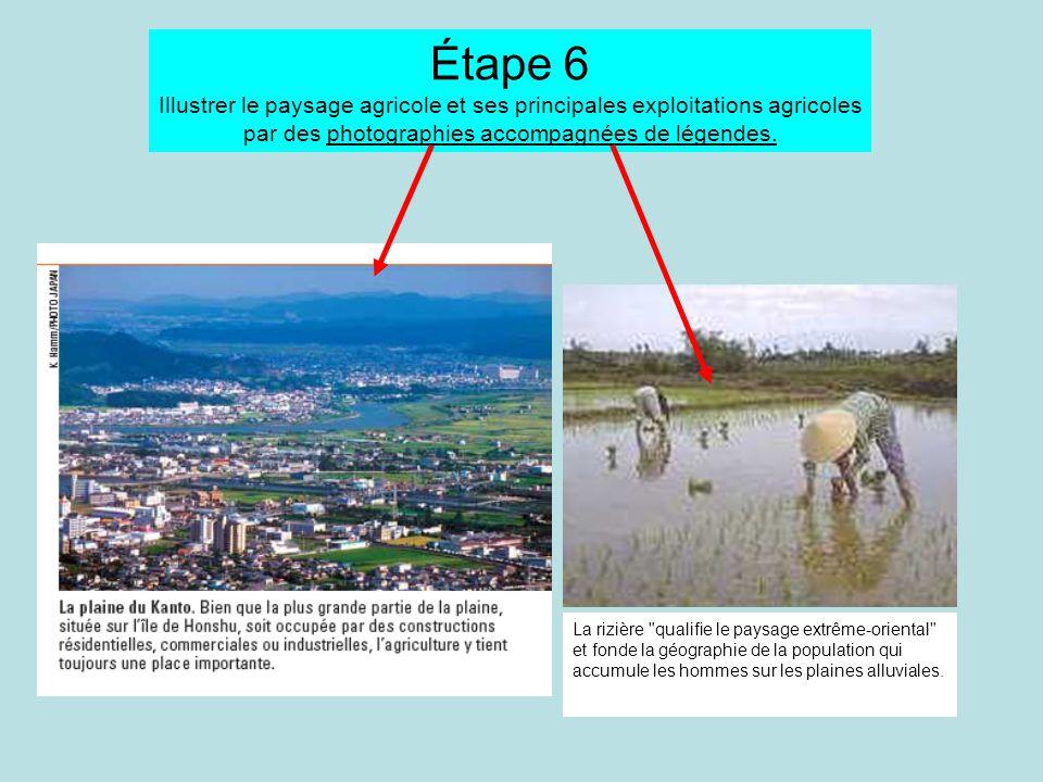 Étape 6 Illustrer le paysage agricole et ses principales exploitations agricoles par des photographies accompagnées de légendes. La rizière