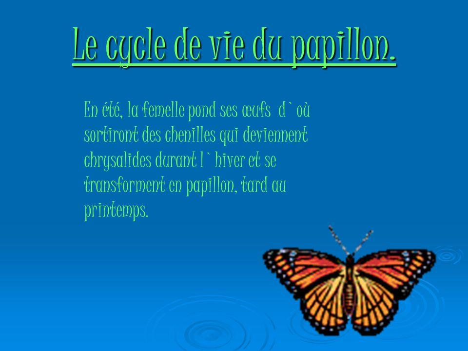 Le cycle de vie du papillon.