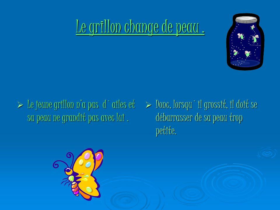 Le cycle de vie du papillon. En été, la femelle pond ses œufs d`où sortiront des chenilles qui deviennent chrysalides durant l`hiver et se transformen