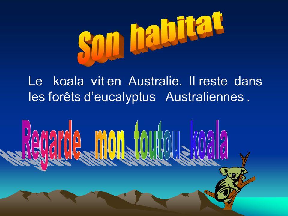 Le koala vit en Australie. Il reste dans les forêts deucalyptus Australiennes.