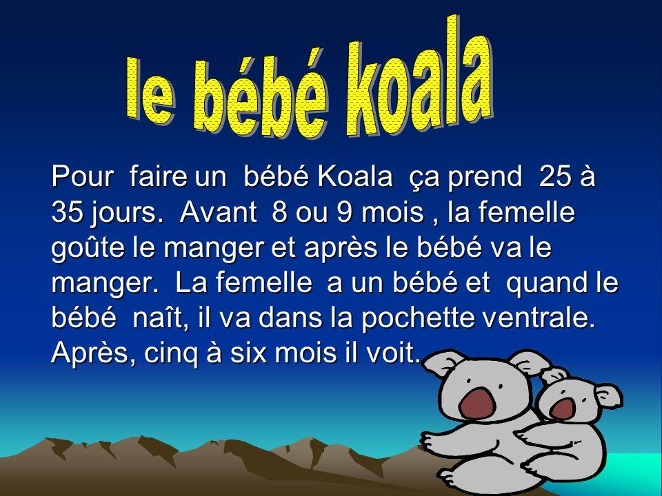 Pour faire un bébé Koala ça prend 25 à 35 jours. Avant 8 ou 9 mois, la femelle goûte le manger et après le bébé va le manger. La femelle a un bébé et