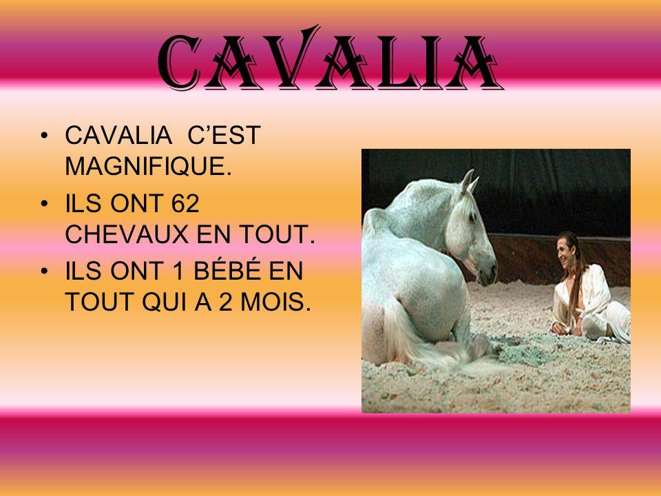 CAVALIA CAVALIA CEST MAGNIFIQUE. ILS ONT 62 CHEVAUX EN TOUT. ILS ONT 1 BÉBÉ EN TOUT QUI A 2 MOIS.