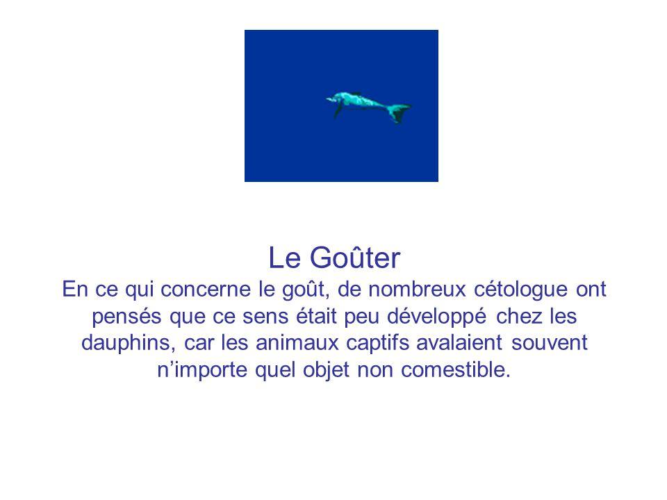 Le Goûter En ce qui concerne le goût, de nombreux cétologue ont pensés que ce sens était peu développé chez les dauphins, car les animaux captifs avalaient souvent nimporte quel objet non comestible.