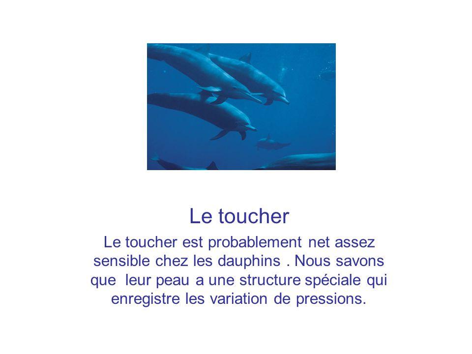 Le toucher (suit) Les dauphins captifs paraissent très sensibles aux caresse,notamment sur la tête autour de lévent et sur la langue.