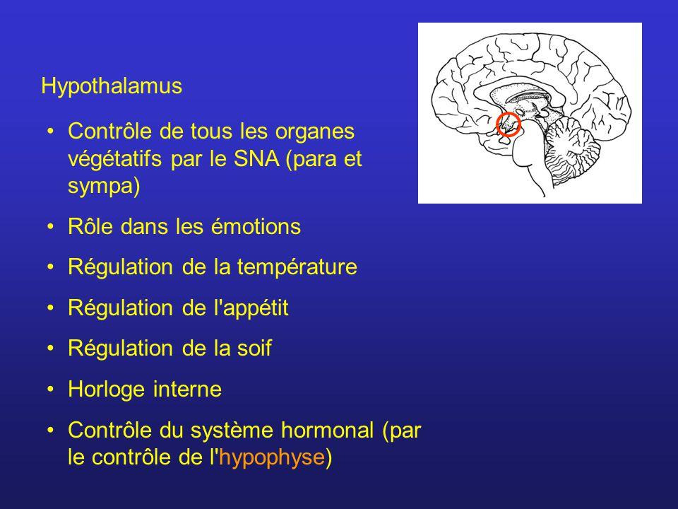 Hypothalamus Contrôle de tous les organes végétatifs par le SNA (para et sympa) Rôle dans les émotions Régulation de la température Régulation de l appétit Régulation de la soif Horloge interne Contrôle du système hormonal (par le contrôle de l hypophyse)