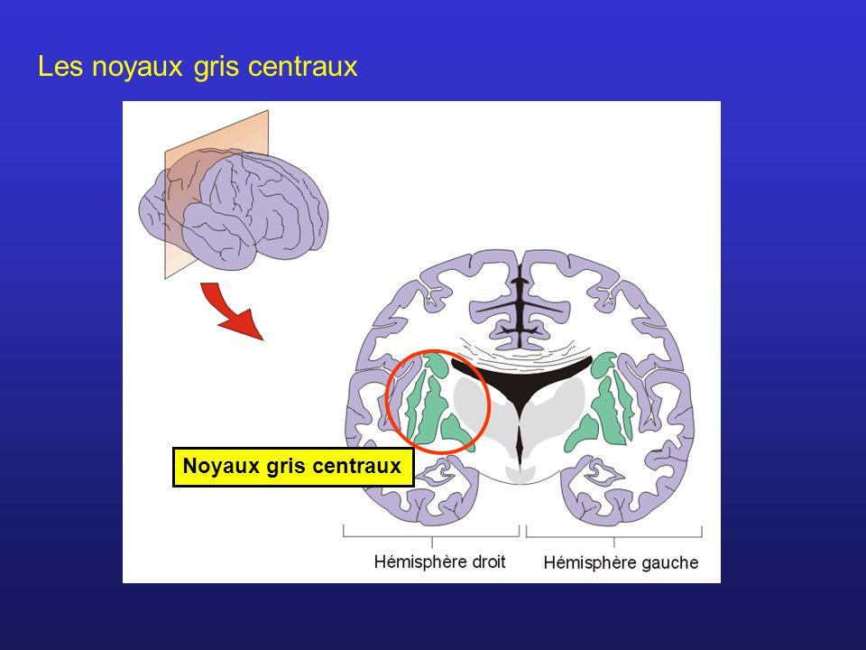 Les noyaux gris centraux Noyaux gris centraux