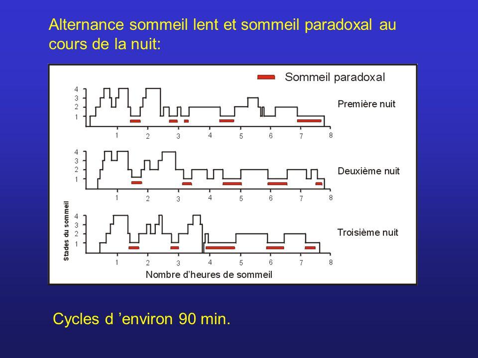 Alternance sommeil lent et sommeil paradoxal au cours de la nuit: Cycles d environ 90 min.