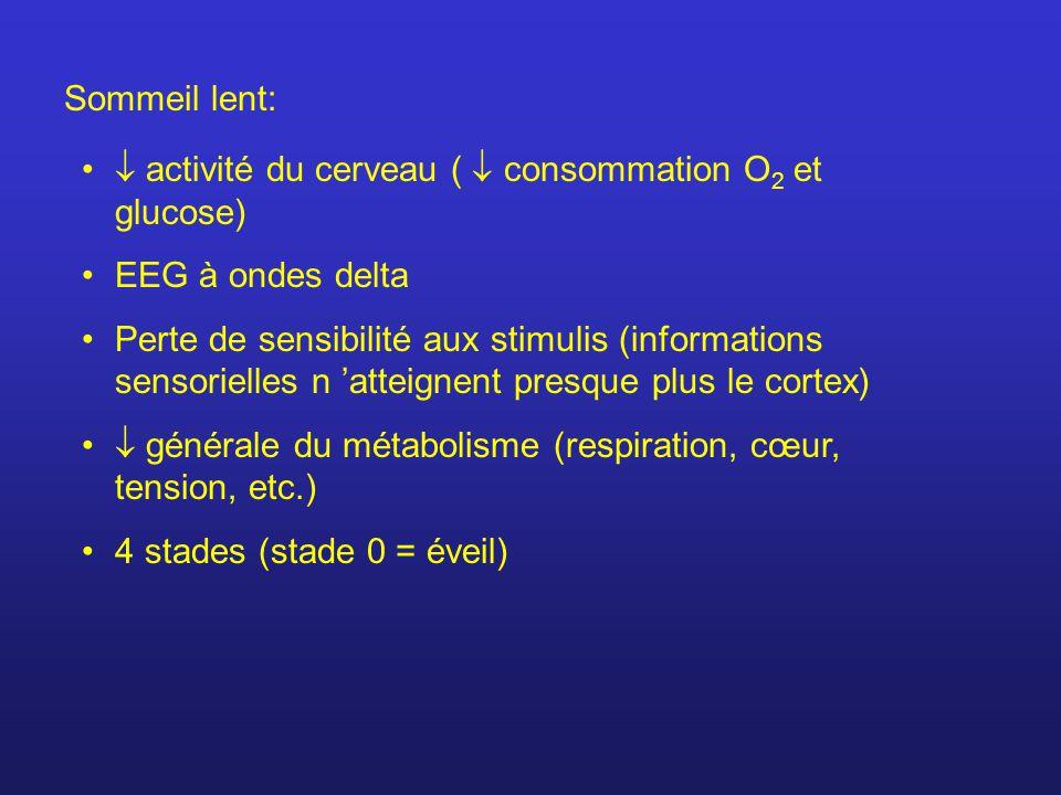 Sommeil lent: activité du cerveau ( consommation O 2 et glucose) EEG à ondes delta Perte de sensibilité aux stimulis (informations sensorielles n atteignent presque plus le cortex) générale du métabolisme (respiration, cœur, tension, etc.) 4 stades (stade 0 = éveil)