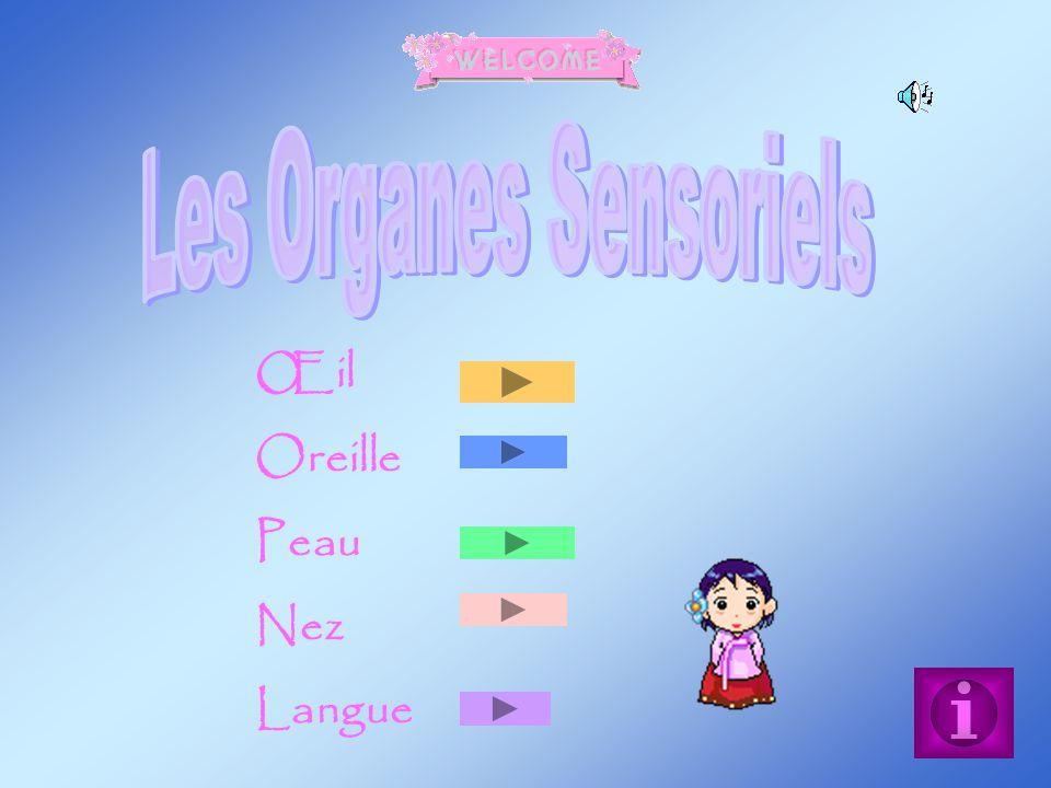 Œil Oreille Peau Nez Langue