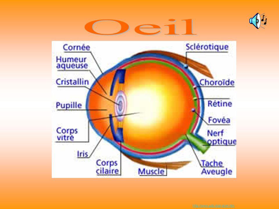http://www.snof.org/art/escher5.html Le dessin est-il réaliste? Oreille