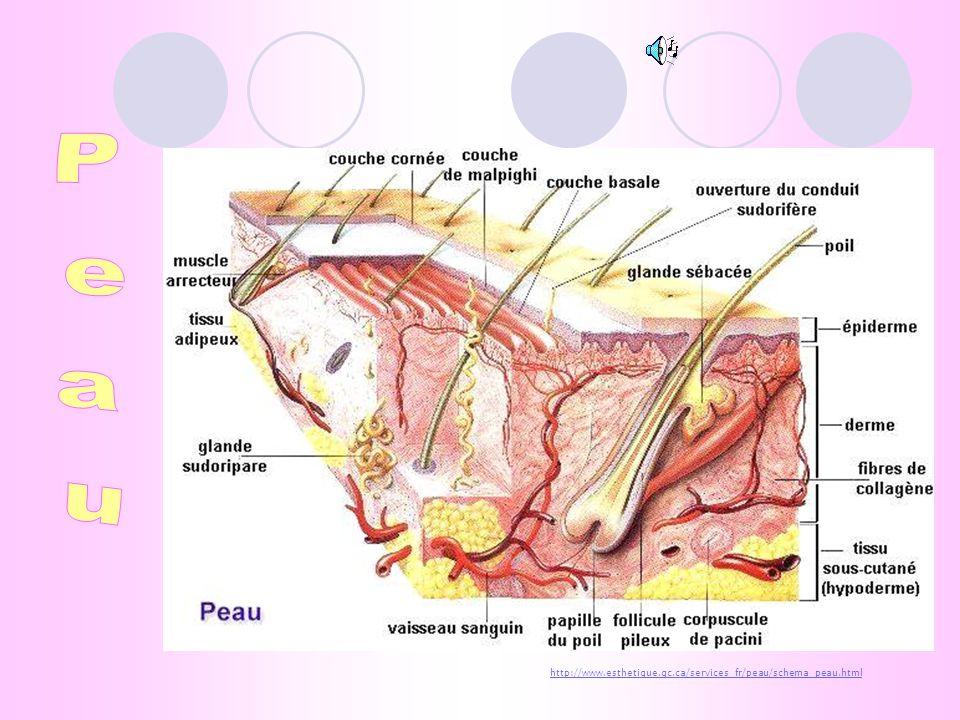 Troubles auditifs Occlusion du conduit auditif par le cérumen Rupture du tympan Otite (surdité de transmission) peau