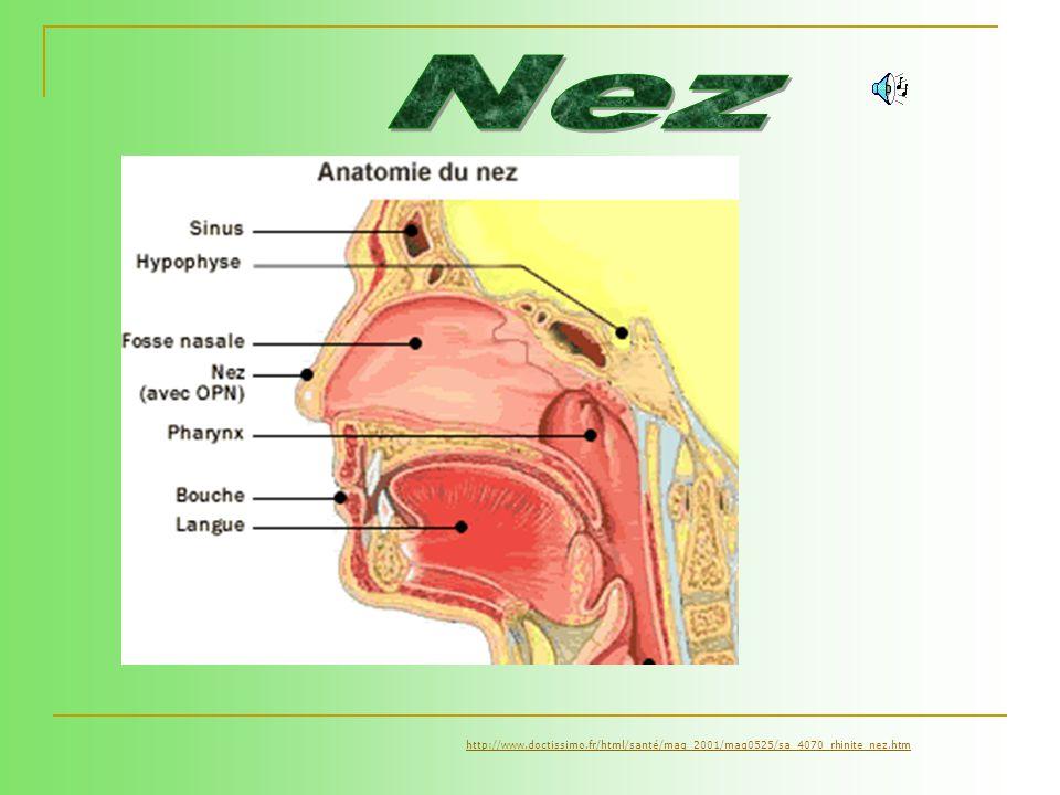 Lacné est une affection bénigne et non contagieuse parce quelle est causée par des bactéries normalement présentes sur la peau nez