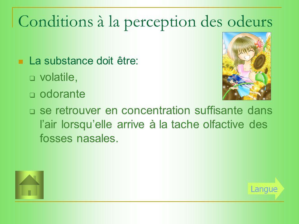 Olfaction Odeurs Nez Tache olfactive Nerf olfactif (bulbe olfactif) Cerveau (aire olfactive) Stimuli Récepteur Transformateur Conducteur Analyseur