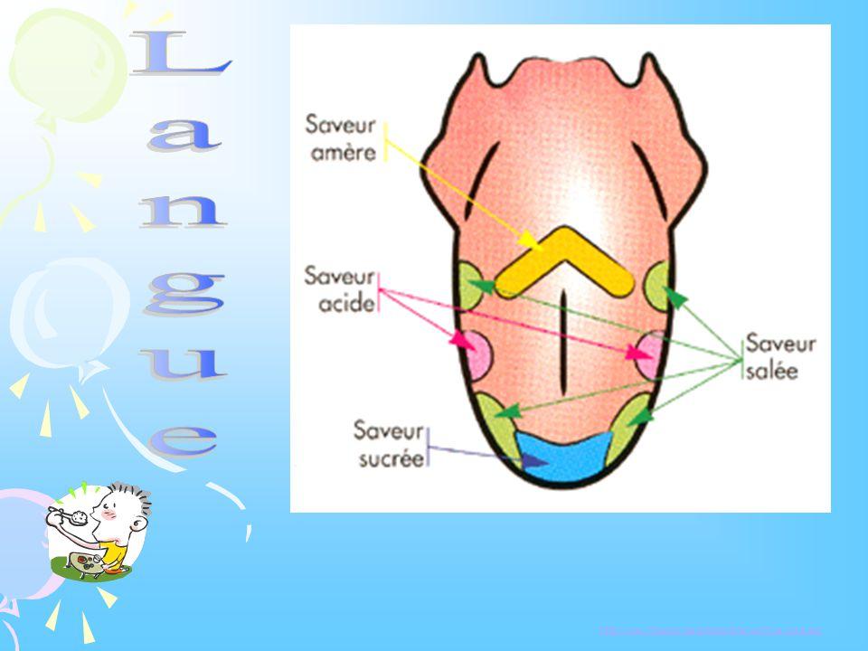 Conditions à la perception des odeurs La substance doit être: volatile, odorante se retrouver en concentration suffisante dans lair lorsquelle arrive à la tache olfactive des fosses nasales.