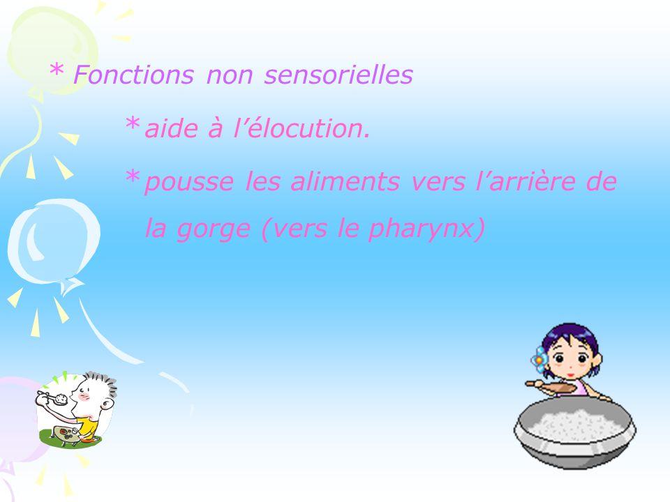 Fonctions de la langue Fonction sensorielle gustation grâce aux papilles gustatives.