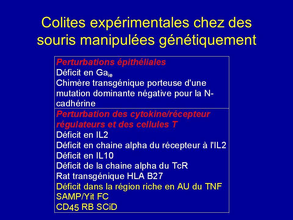 Colites expérimentales chez des souris manipulées génétiquement