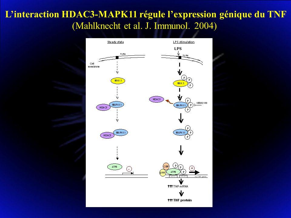 LES CYTOKINES PROINFLAMMATOIRES REGULENT LA REPLICATION DU HIV essentiellement à deux niveaux du cycle viral : pénétration virale et transcription virale Au niveau de la pénétration virale : 1.Le TNF en se fixant au TNFR2 inhibe la pénétration du HIV dans les macrophages, résultant ainsi en une homéostasie virale intracellulaire : pas de superinfection des cellules et réplication virale contrôlée dans les phagocytes mononucléés (Herbein et al.