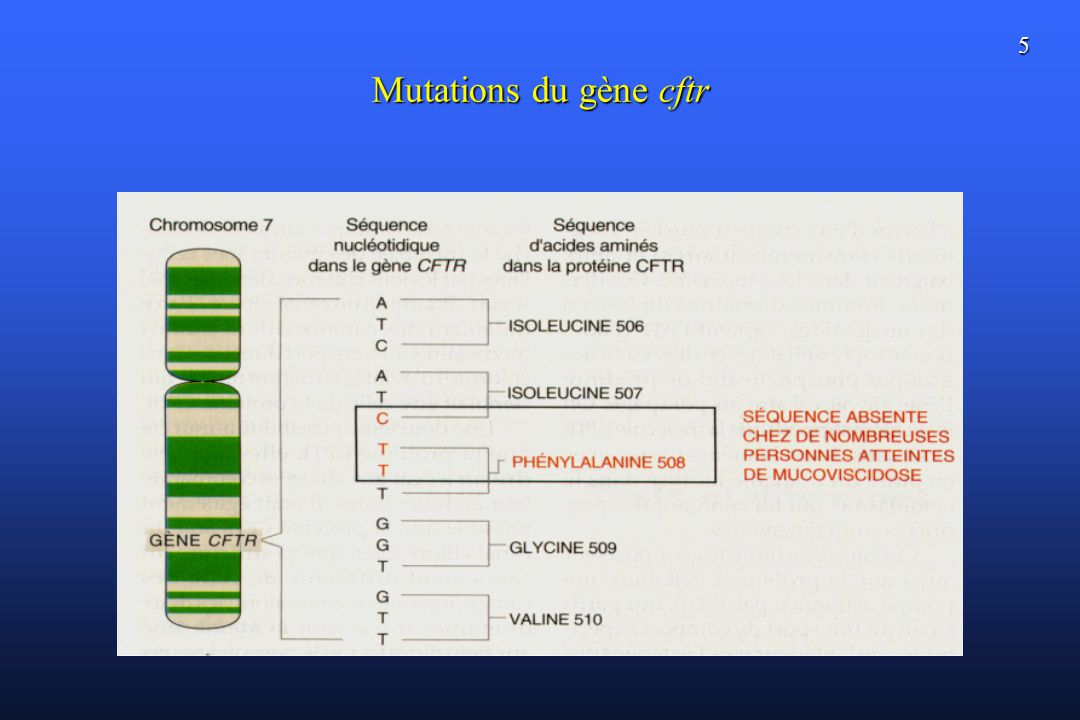 5 Mutations du gène cftr