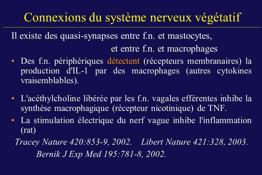 Connexions du système nerveux végétatif Il existe des quasi-synapses entre f.n. et mastocytes, et entre f.n. et macrophages Des f.n. périphériques dét