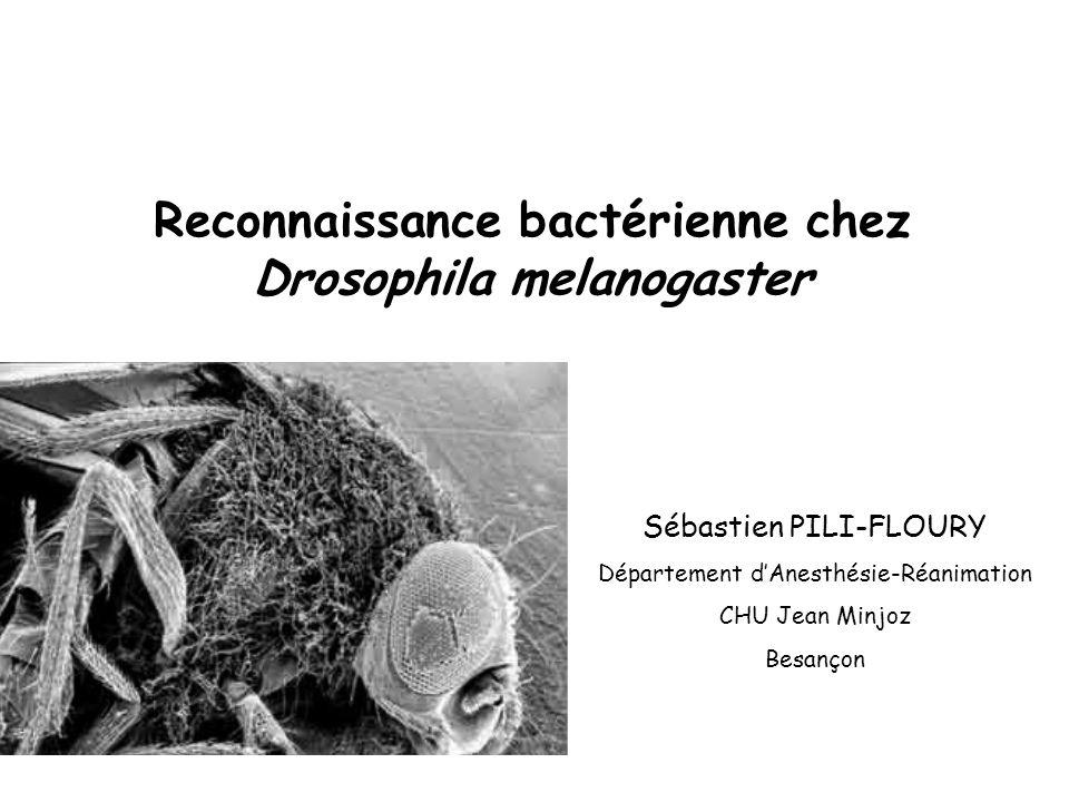Reconnaissance bactérienne chez Drosophila melanogaster Sébastien PILI-FLOURY Département dAnesthésie-Réanimation CHU Jean Minjoz Besançon