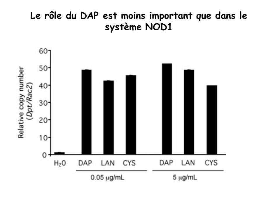 Le rôle du DAP est moins important que dans le système NOD1